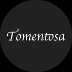 Tomentosa
